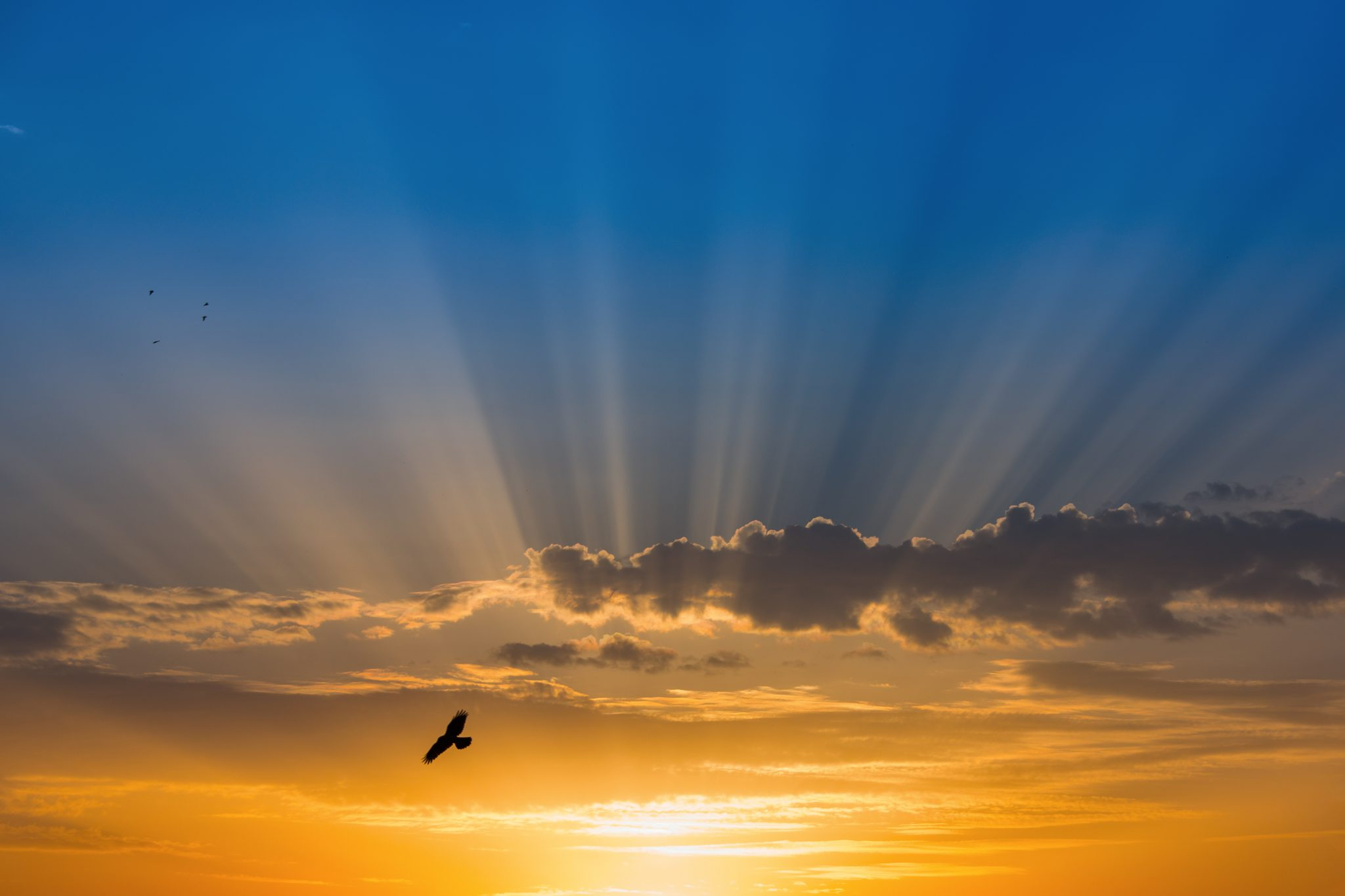 Bird over rays of light in blue sky inspiration for Populist Cleaning Co. logo